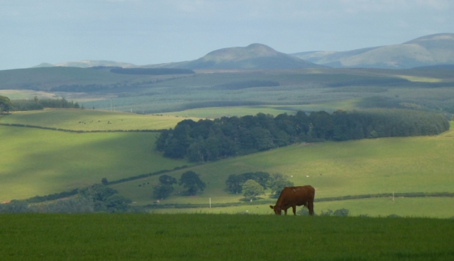 road to chesters, scottish borders with cheviot hills in background